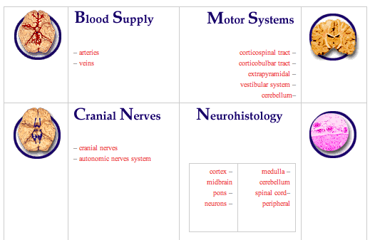neuroanatomy study guide