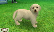 nintendogs dachshund and friends guide