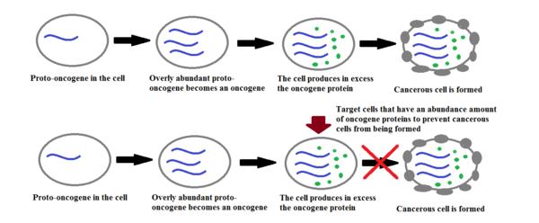 oncogenes pdf
