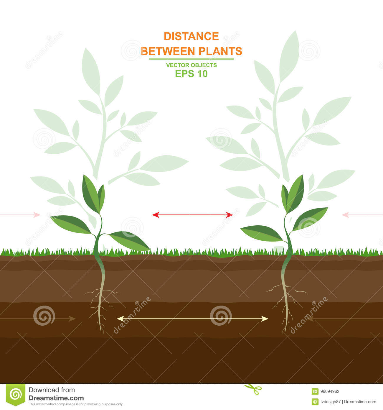 tree planting spacing guide